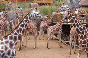 cheyenne_mountain_zoo